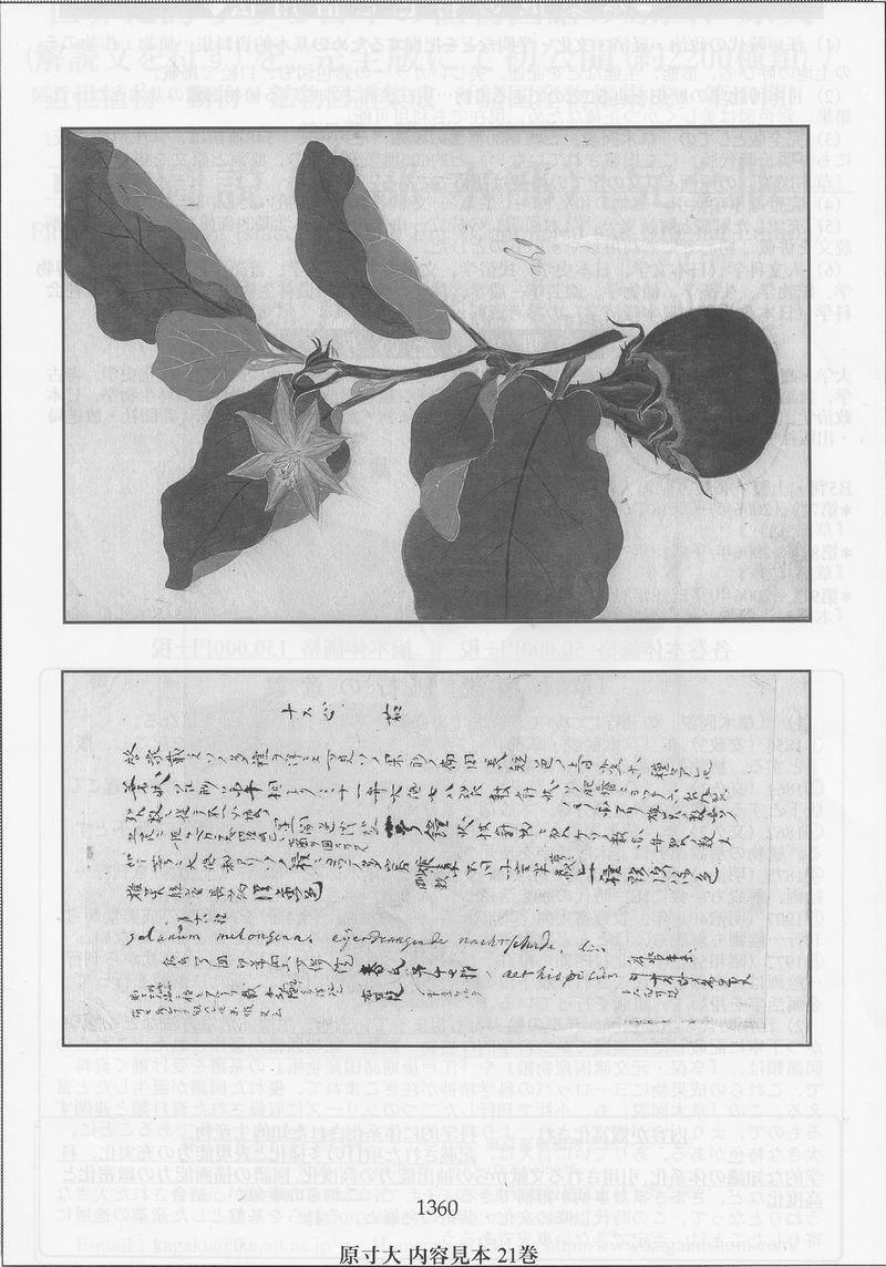 飯沼 慾齋『草木図説・完全版(草部2/草之十五~草之二十七・補遺)』